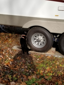 Gus standing next to tire