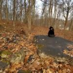 Gus on a huge black rock