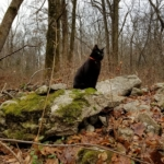 Gus on mossy rock