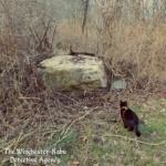 Gus at the boulder