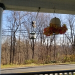 squirrel balancing on pole near feeder