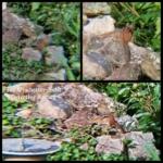 Cheeks Moretti chipmunk collage