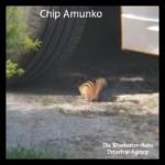 Chip Amunko
