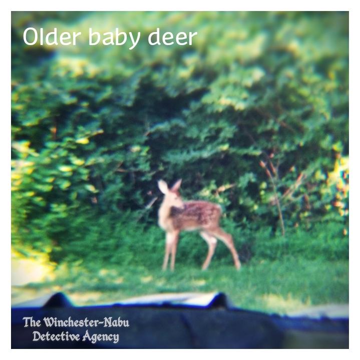 20190713_deer2