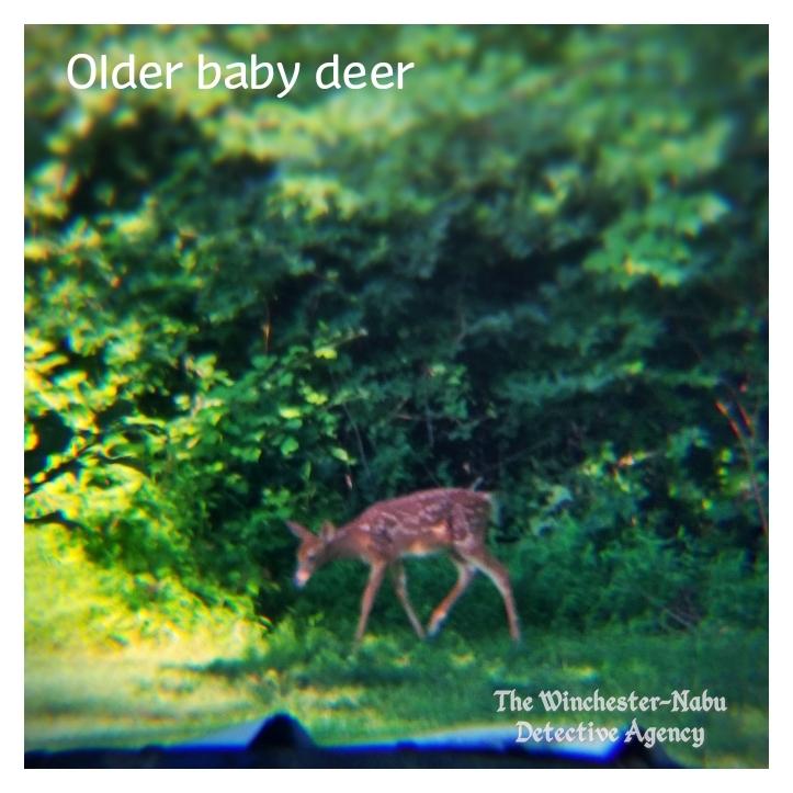 20190713_deer4