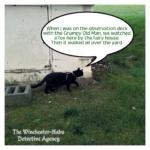Gus by wellhouse