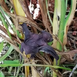 baby bat on lily stems
