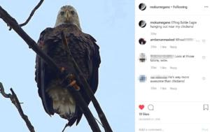 eagle by bruce hockenbury