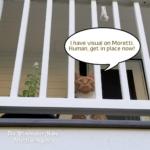 cat Ollie