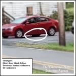 cat under red car