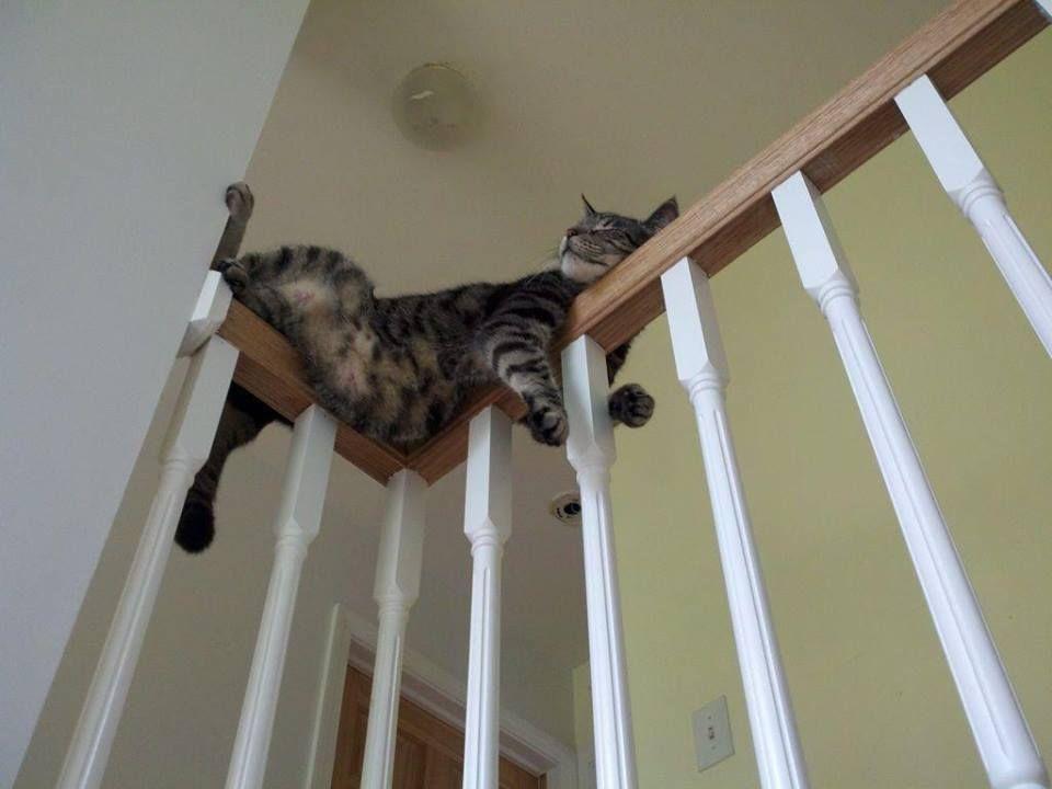 cat on a railing