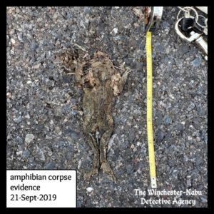 toad corpse