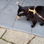 Gus capturing chipmunk