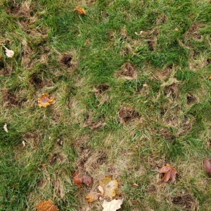 divots in the ground crop circle formation