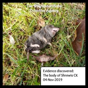 dead shrew evidence
