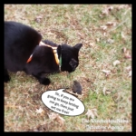 Gus and Vole Fielding
