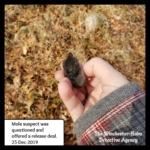 Mole suspect