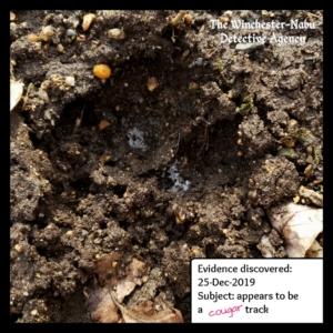 paw print in mud