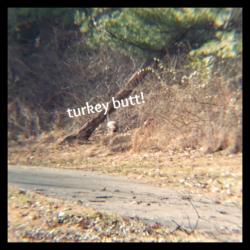 turkey entering woods