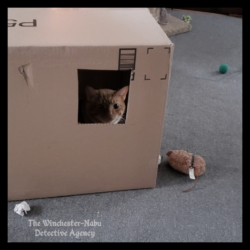 Oliver in a box fort