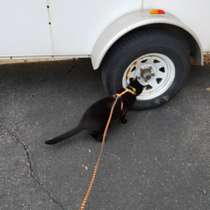 Gus sniffing the NY trailer