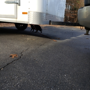 Gus inspecting the NY trailer