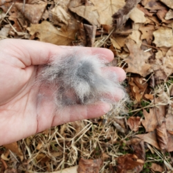 fur hair clump in a hand over the ground