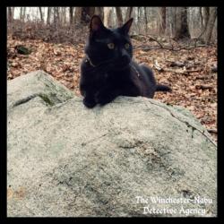 Gus on a boulder