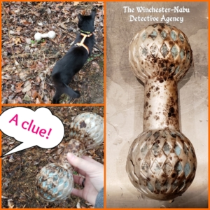 collage of dog toy