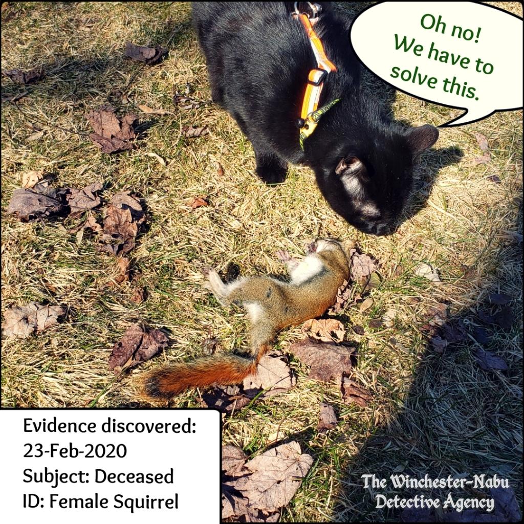 20200223 squirrel murder 01