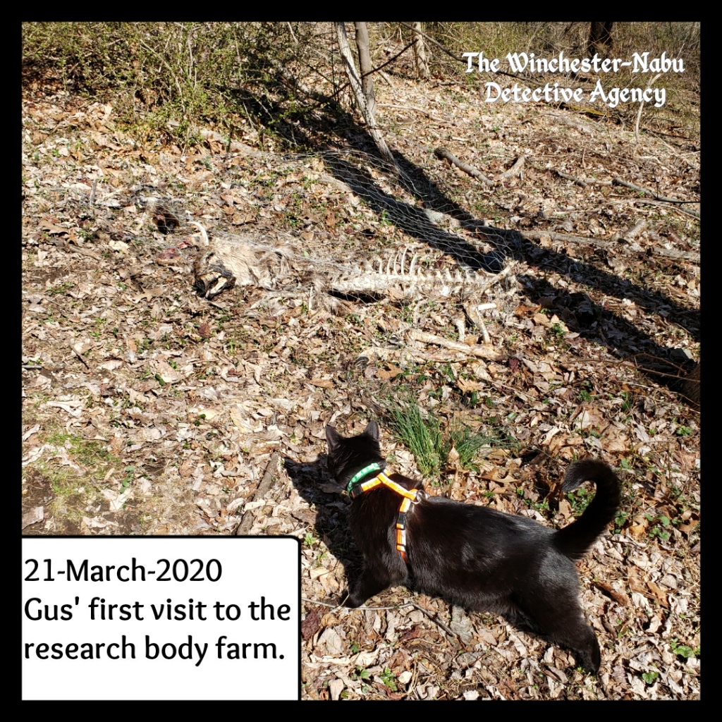 20200321 bodyfarm 2