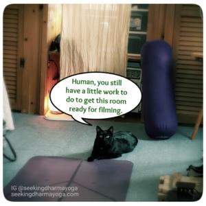 Gus by yoga mat