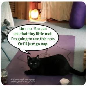 Gus on purple yoga mat