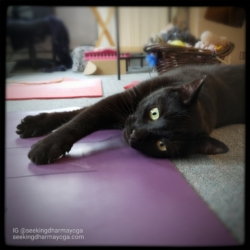 Gus lying with his head and paws on the yoga mat
