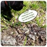 Gus finding snake in grass