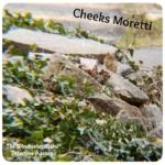 cheeks moretti chipmunk