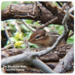 chipmunk sitting in branches