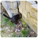 black cat Gus in cinder blocks