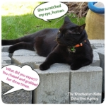 black cat Gus winking