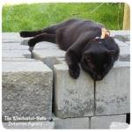black cat Gus lying on cinder blocks