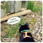 black cat Gus peering under pallet