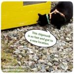 Gus looking for chipmunk