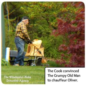 Grumpy Old Man pushing Ollie