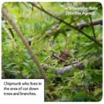 chipmunk in bushes