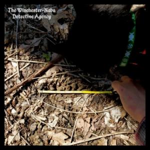 Gus investigating wildlife bear volkolak tracks