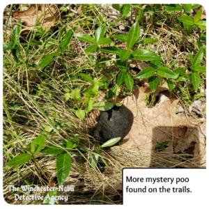 mysterious wildlife feces poo