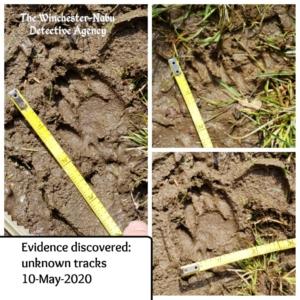 unknown wildlife tracks