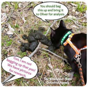 Gus investigating enormous wildlife bear volkolak feces poo