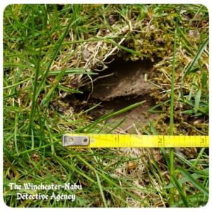 hoof wildlife tracks