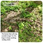 jersey devil-deer skeleton in the woods